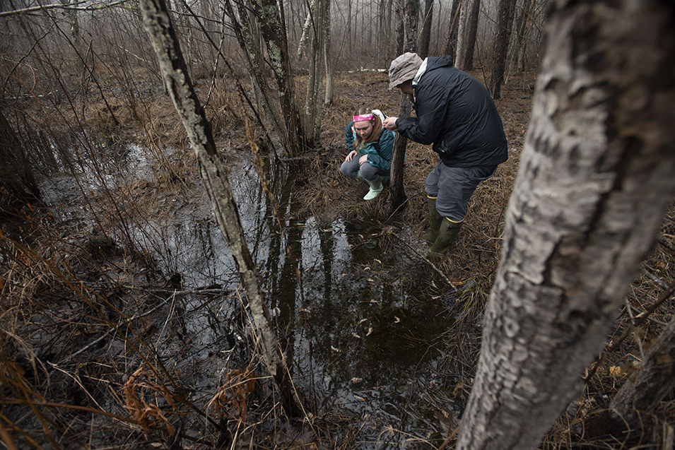 Students participate in a vernal pool study on the grounds of Husson University